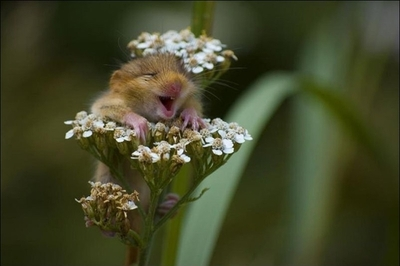 17 smiling animals to start your day 16