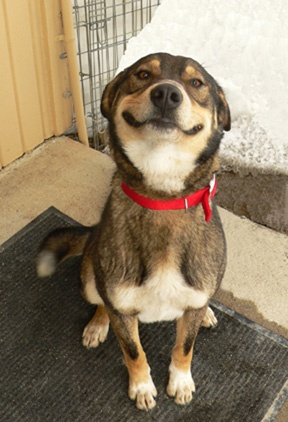 17 smiling animals to start your day 2