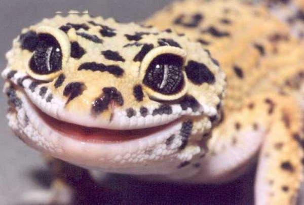 17 smiling animals to start your day 5