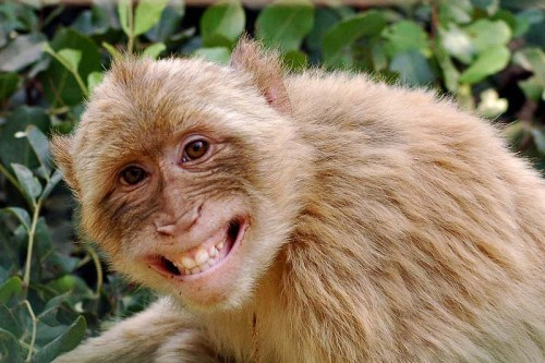 17 smiling animals to start your day 8