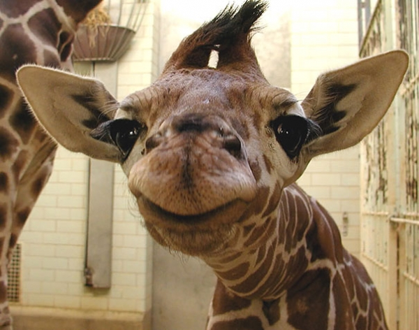 17 smiling animals to start your day 9