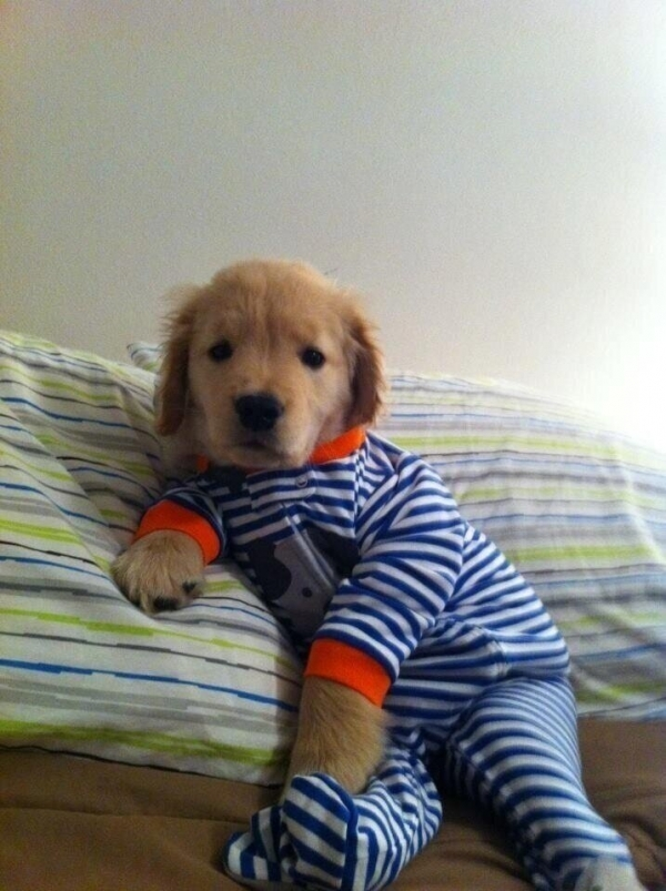 21 pic of adorable little guys all ready for nap time 14