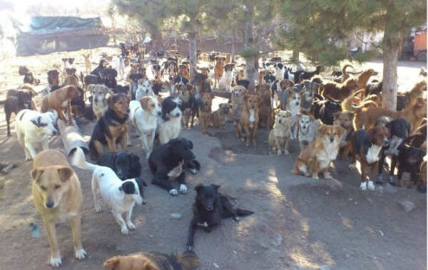 450 dogs asked for help and the internet answered 11