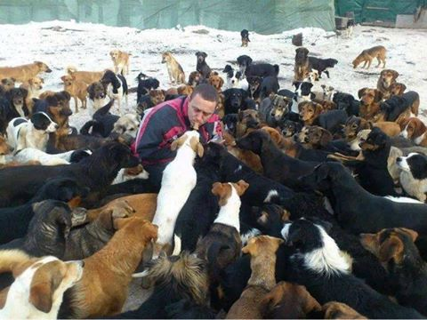 450 dogs asked for help and the internet answered 12