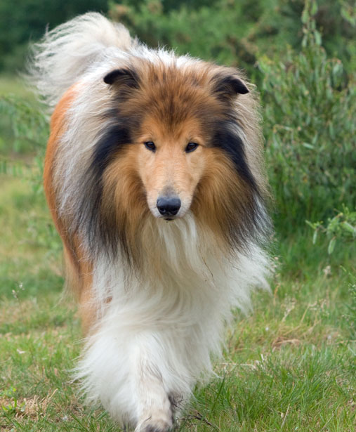 7 most wanted breeds in 2013 according to google 2