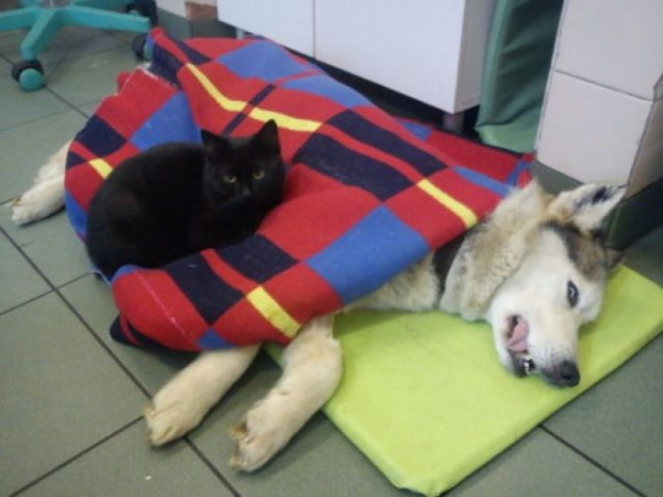 7 pictures of the nurse cat that helps his sick buddies in shelter get better 4