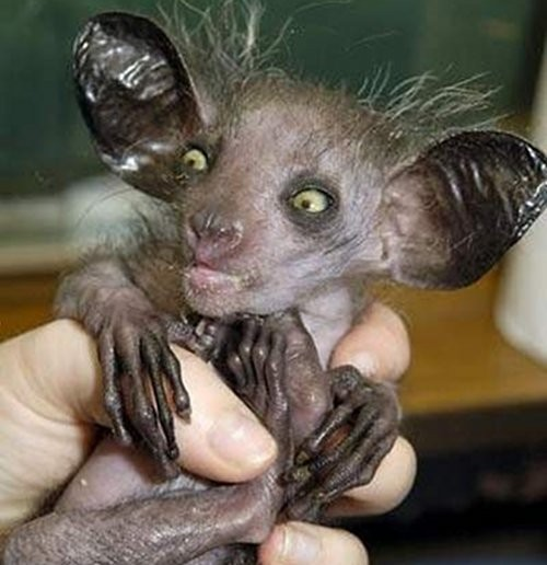 7 scary looking animals that are actually harmless 1