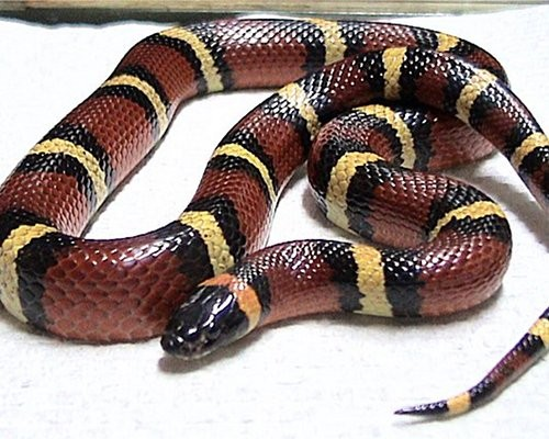 7 scary looking animals that are actually harmless 5