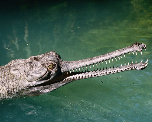 7 scary looking animals that are actually harmless 7