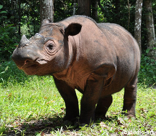 8 rarest and most endangered species in existance 8