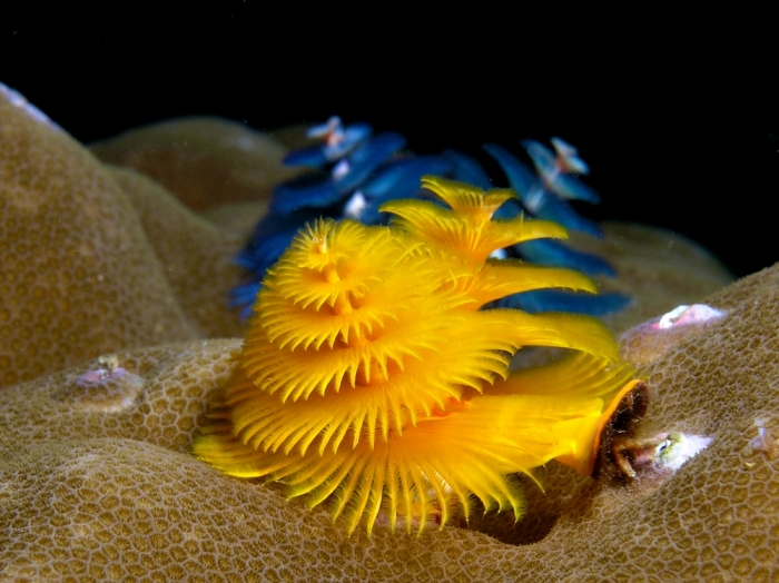 9 beautifully colored animals 10