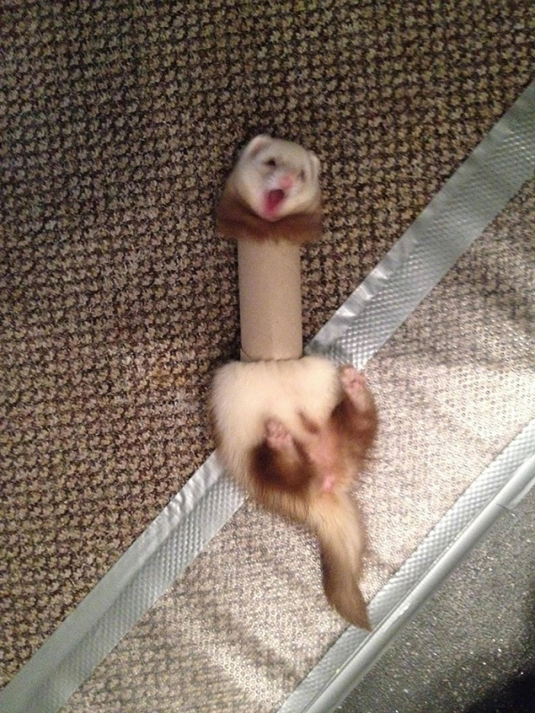 a cat a dog a ferret 10 pictures 7
