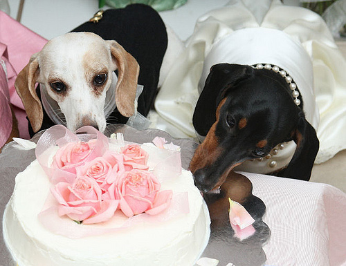 a happiest day of doggys life 15 pics 24