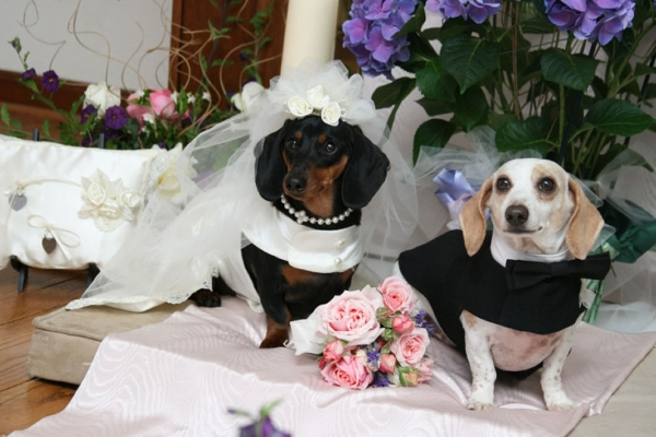 a happiest day of doggys life 15 pics 26