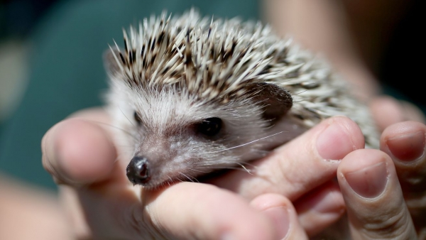 a must visit for hedgehog lovers 19 pictures 11
