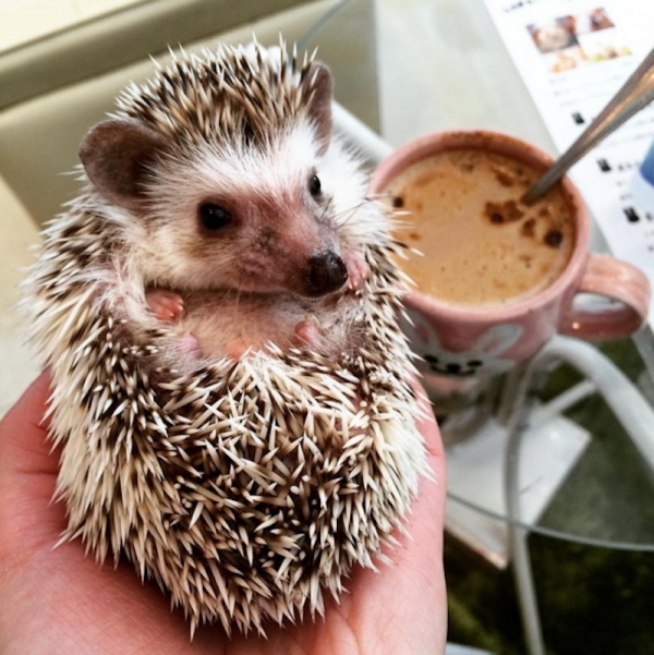 a must visit for hedgehog lovers 19 pictures 14