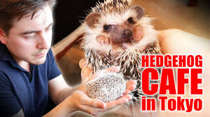 a must visit for hedgehog lovers 19 pictures 15
