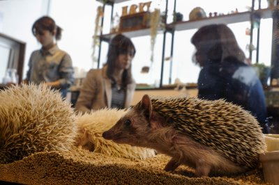 a must visit for hedgehog lovers 19 pictures 3
