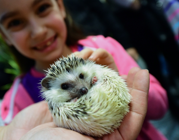 a must visit for hedgehog lovers 19 pictures 4