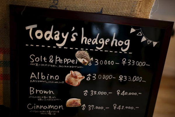 a must visit for hedgehog lovers 19 pictures 9