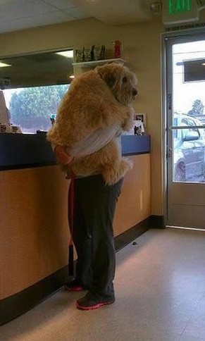 a trip to the vet not if i can do anything bout it 18 pics 17