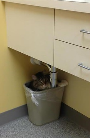 a trip to the vet not if i can do anything bout it 18 pics 5