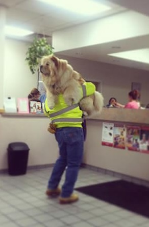 a trip to the vet not if i can do anything bout it 18 pics 9