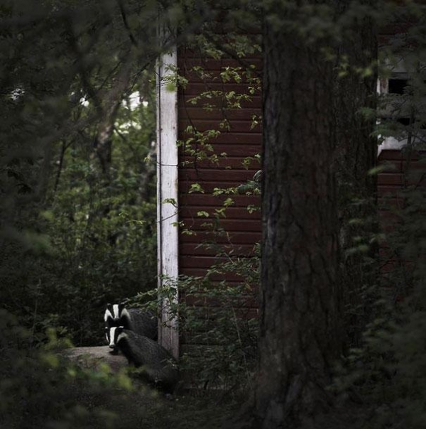 abandoned cottage in the woods is not always empty 9