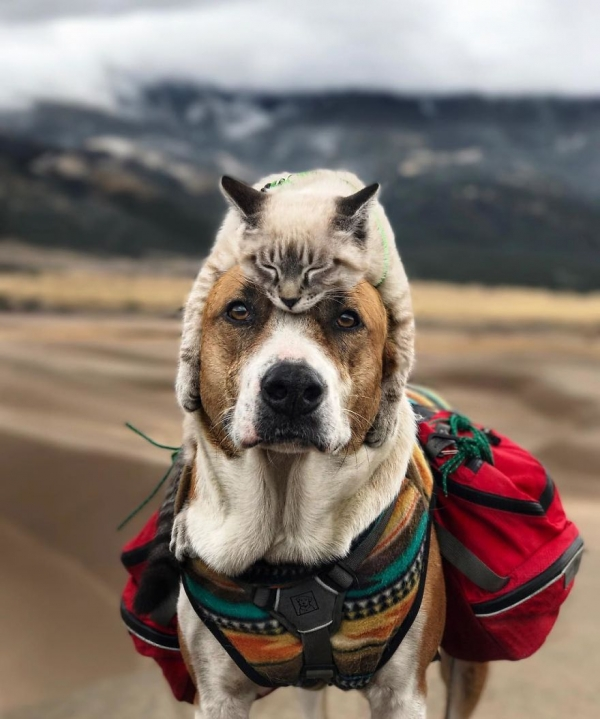 adventurous travel buddies henry and baloo 9 pictures 3