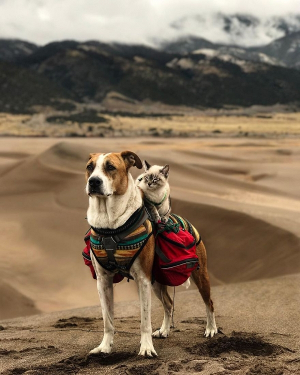 adventurous travel buddies henry and baloo 9 pictures 4