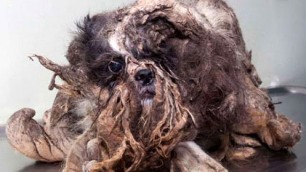 amazing transformation poor puppy was mistaken for a pile of garbage 1