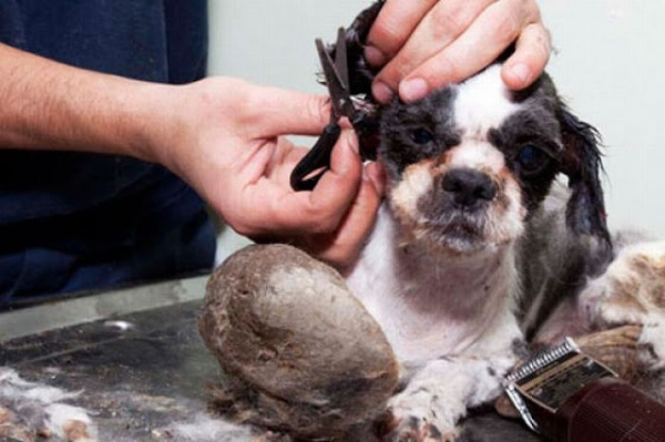 amazing transformation poor puppy was mistaken for a pile of garbage 6