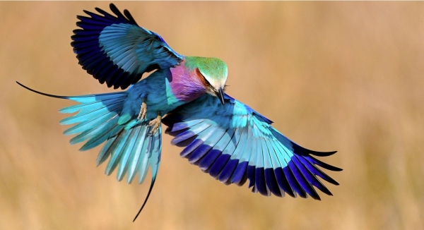amazing wildlife in neon colors 10 pictures 7