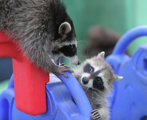 an adoarble place racoon house 10 pictures 2 videos 1