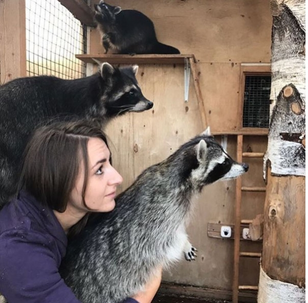an adoarble place racoon house 10 pictures 2 videos 4