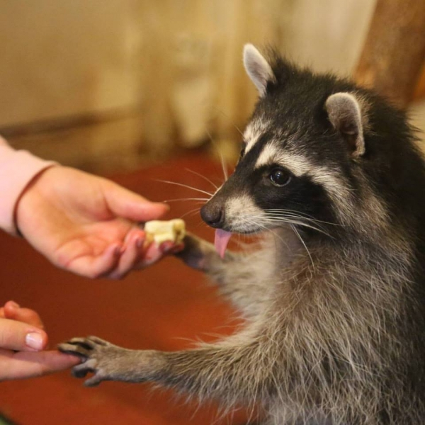 an adoarble place racoon house 10 pictures 2 videos 5
