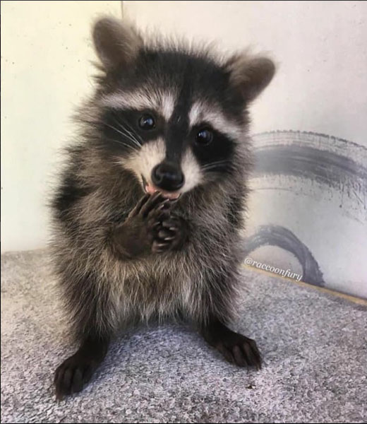 an adoarble place racoon house 10 pictures 2 videos 6