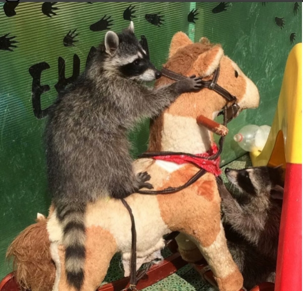 an adoarble place racoon house 10 pictures 2 videos 7