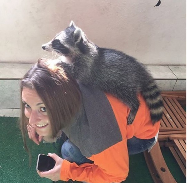 an adoarble place racoon house 10 pictures 2 videos 9