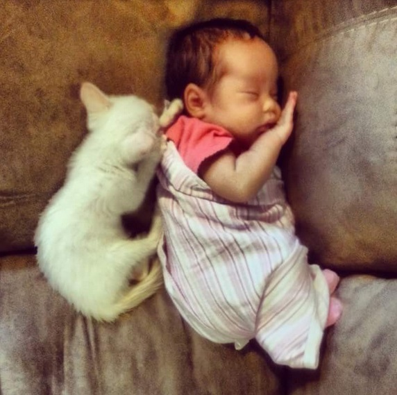 an adorable cat whisperer 10 pictures 1