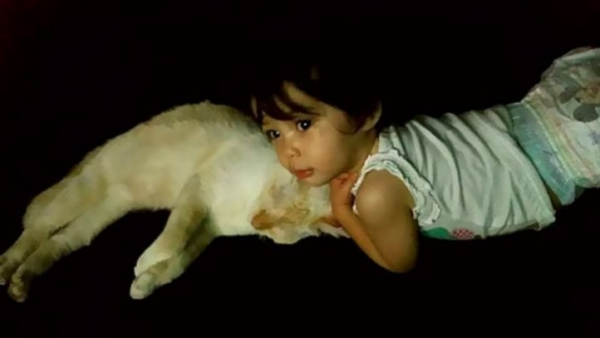 an adorable cat whisperer 10 pictures 10