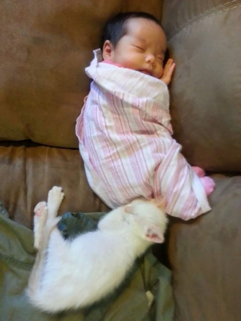 an adorable cat whisperer 10 pictures 2