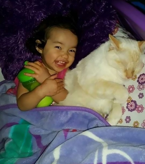 an adorable cat whisperer 10 pictures 5