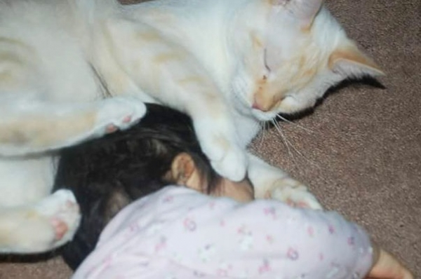an adorable cat whisperer 10 pictures 6