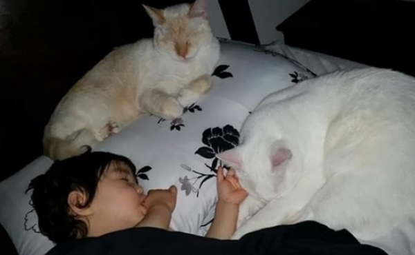 an adorable cat whisperer 10 pictures 7