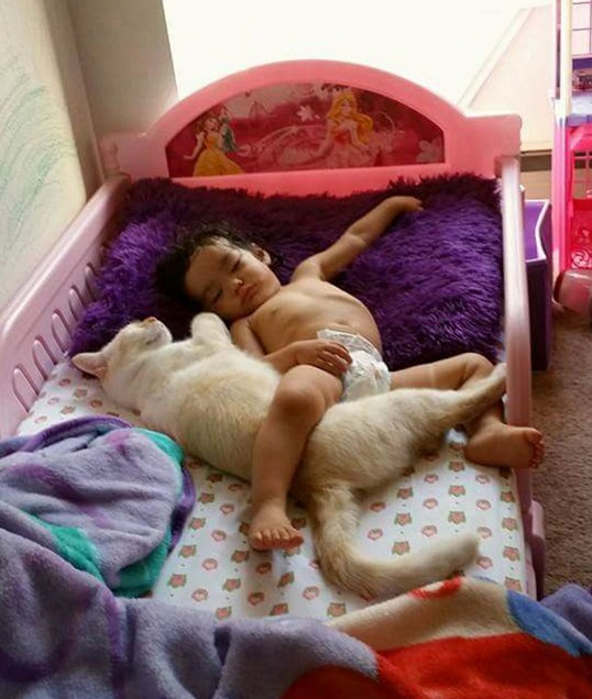 an adorable cat whisperer 10 pictures 9