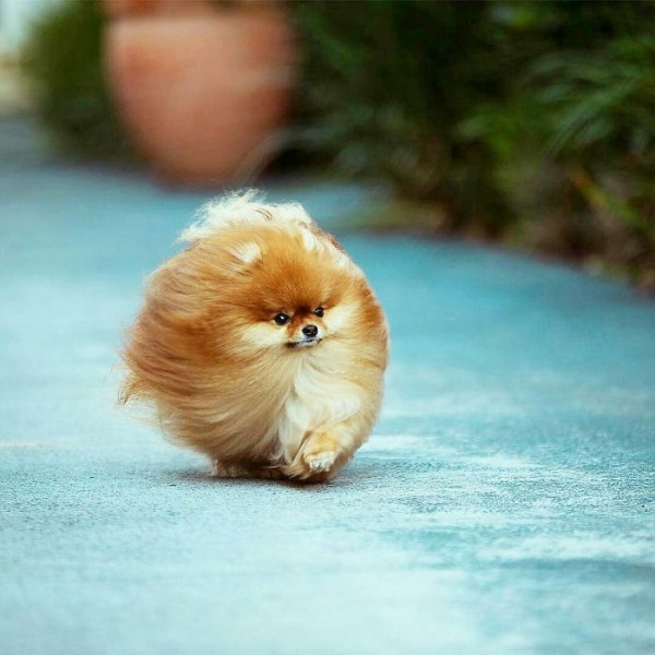 animals come in all shapes round is the cutest one 15 pictures 13