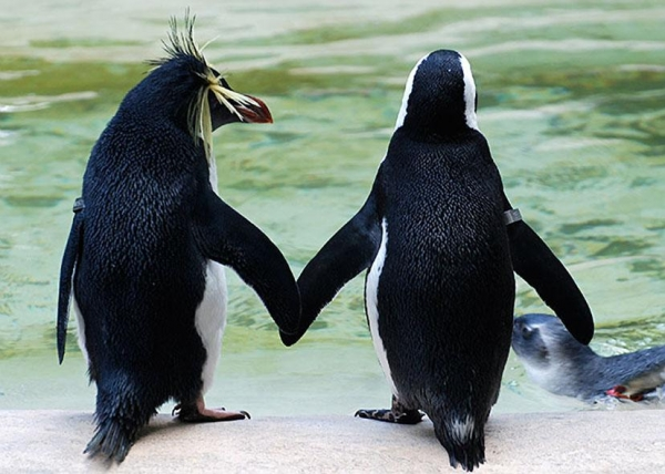 animals holding hands are definitely as cute as you thought theyd be 12 pictures 10