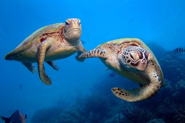 animals holding hands are definitely as cute as you thought theyd be 12 pictures 6