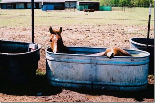animals that enjoy bath time 16 pictures 14